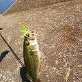 悠次郎さんの福岡県京都郡での釣果写真