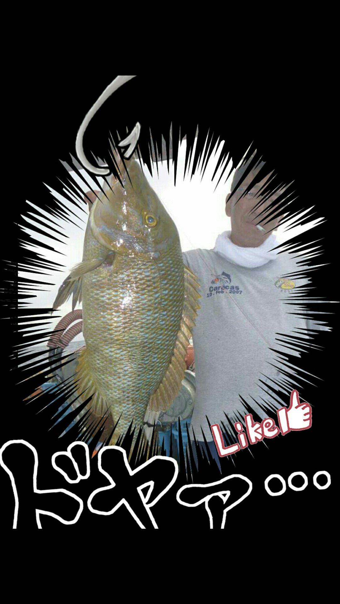 boboss5さんの投稿画像,写っている魚はハマフエフキダイ