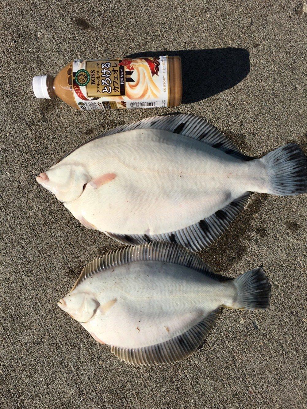 anglerさんの投稿画像,写っている魚はクロガレイ