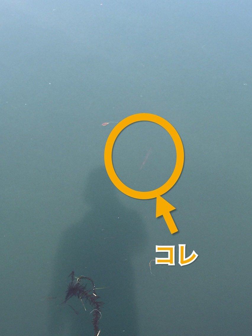 らたちゃんさんの投稿画像,写っている魚は