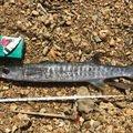 jiggerさんのオニカマスの釣果写真