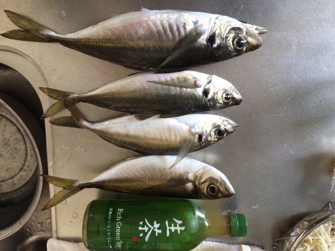 かみーゆさんの投稿画像,写っている魚はアジ