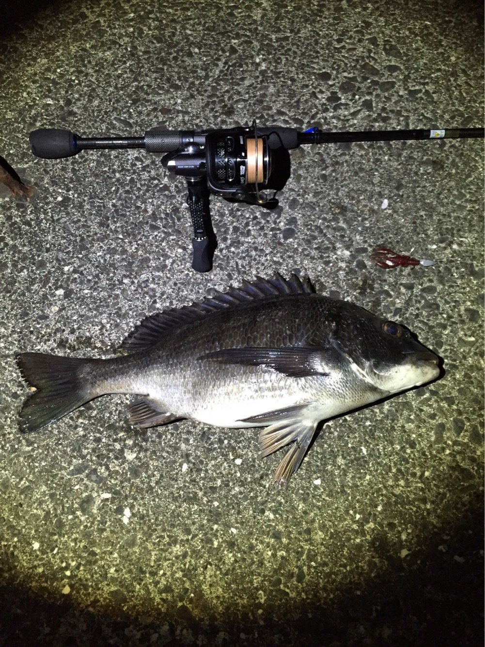 ジョンさんの投稿画像,写っている魚はクロダイ