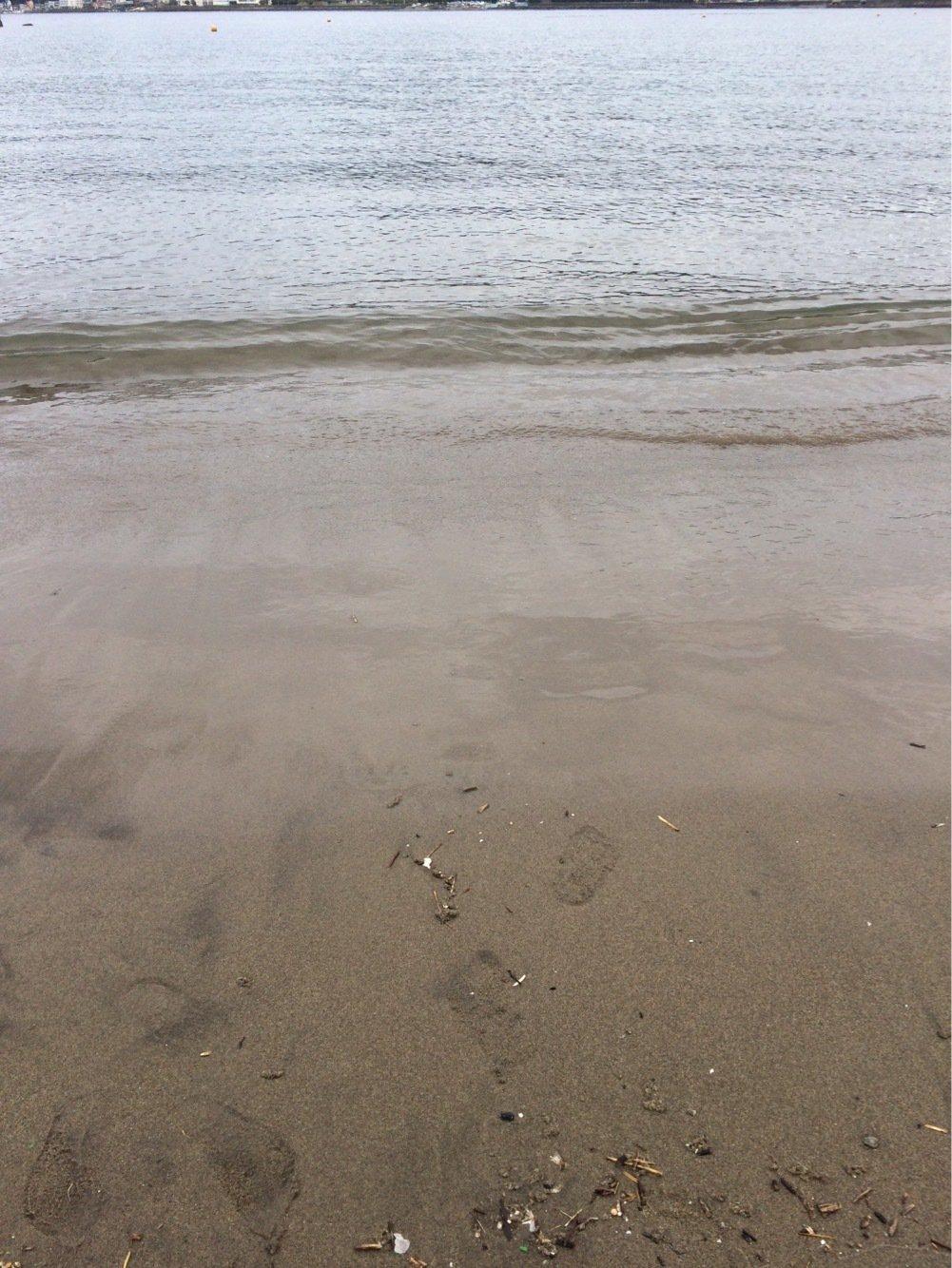 モアイさんの投稿画像,写っている魚はアオリイカ