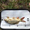 釣りキチこじ平さんの茨城県つくば市での釣果写真