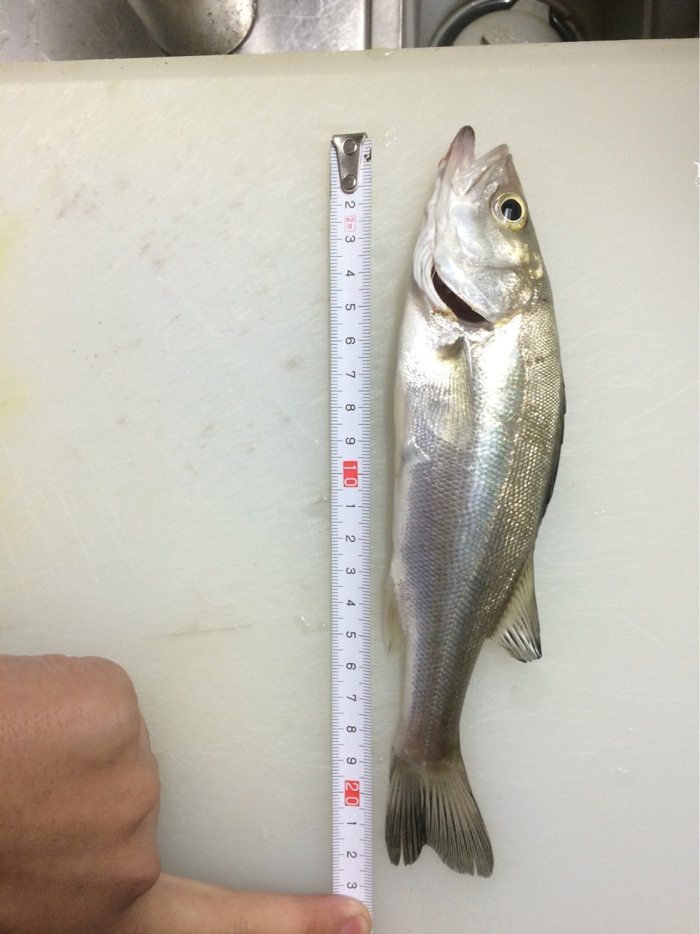 竜太朗さんの投稿画像,写っている魚はスズキ