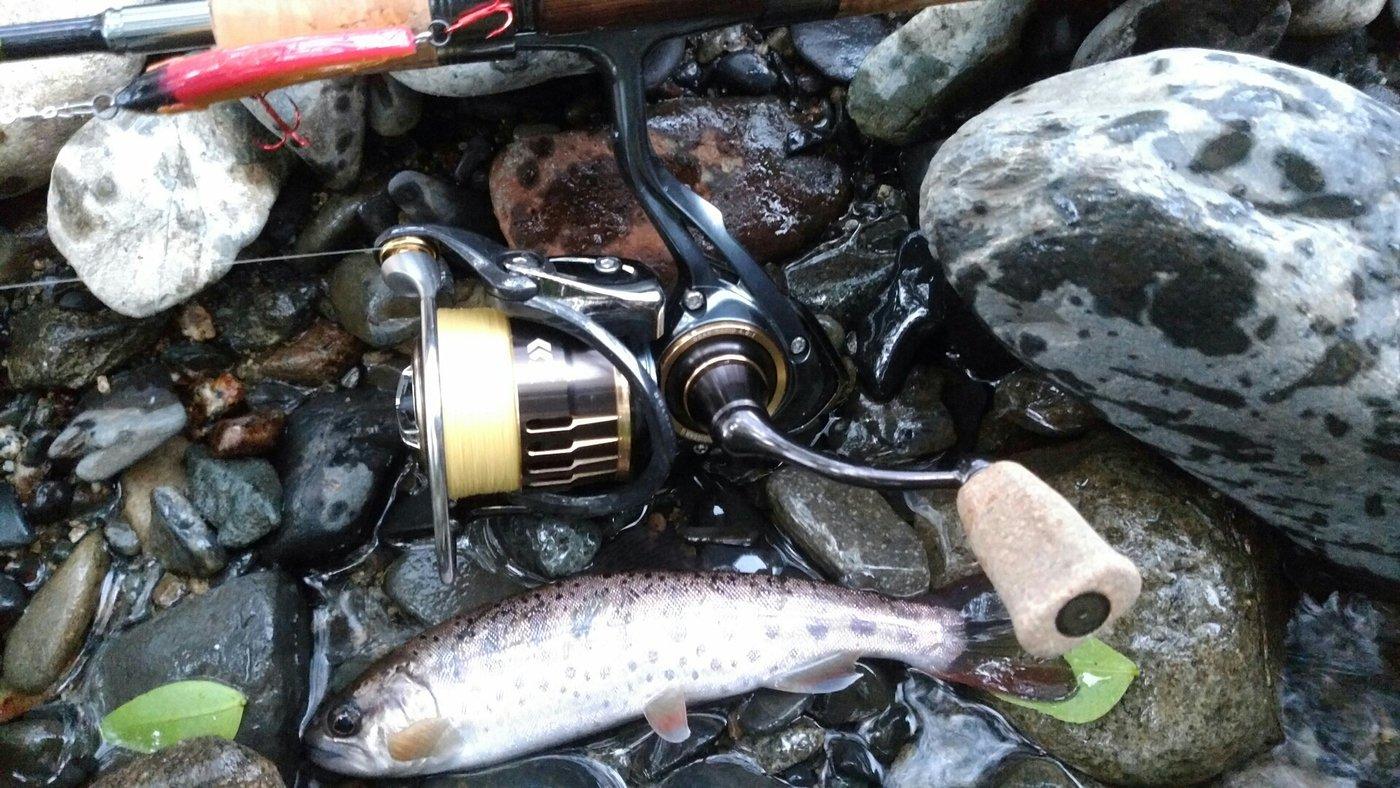 Tony-Daichiさんの投稿画像,写っている魚はヤマメ