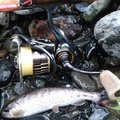 Tony-Daichiさんの岩手県遠野市での釣果写真