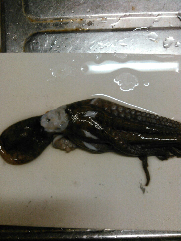 ЙθβЦさんの投稿画像,写っている魚はマダコ