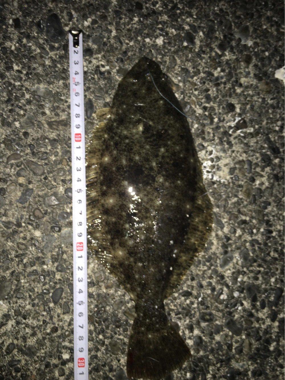 くろさんの投稿画像,写っている魚はヒラメ