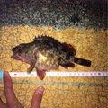 つっしーさんの広島県安芸高田市での釣果写真