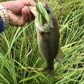 グリンチさんの兵庫県三木市での釣果写真