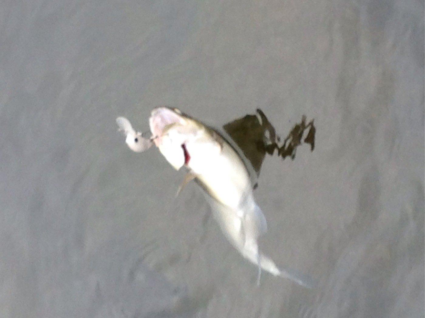 ヒルネさんの投稿画像,写っている魚はニジマス