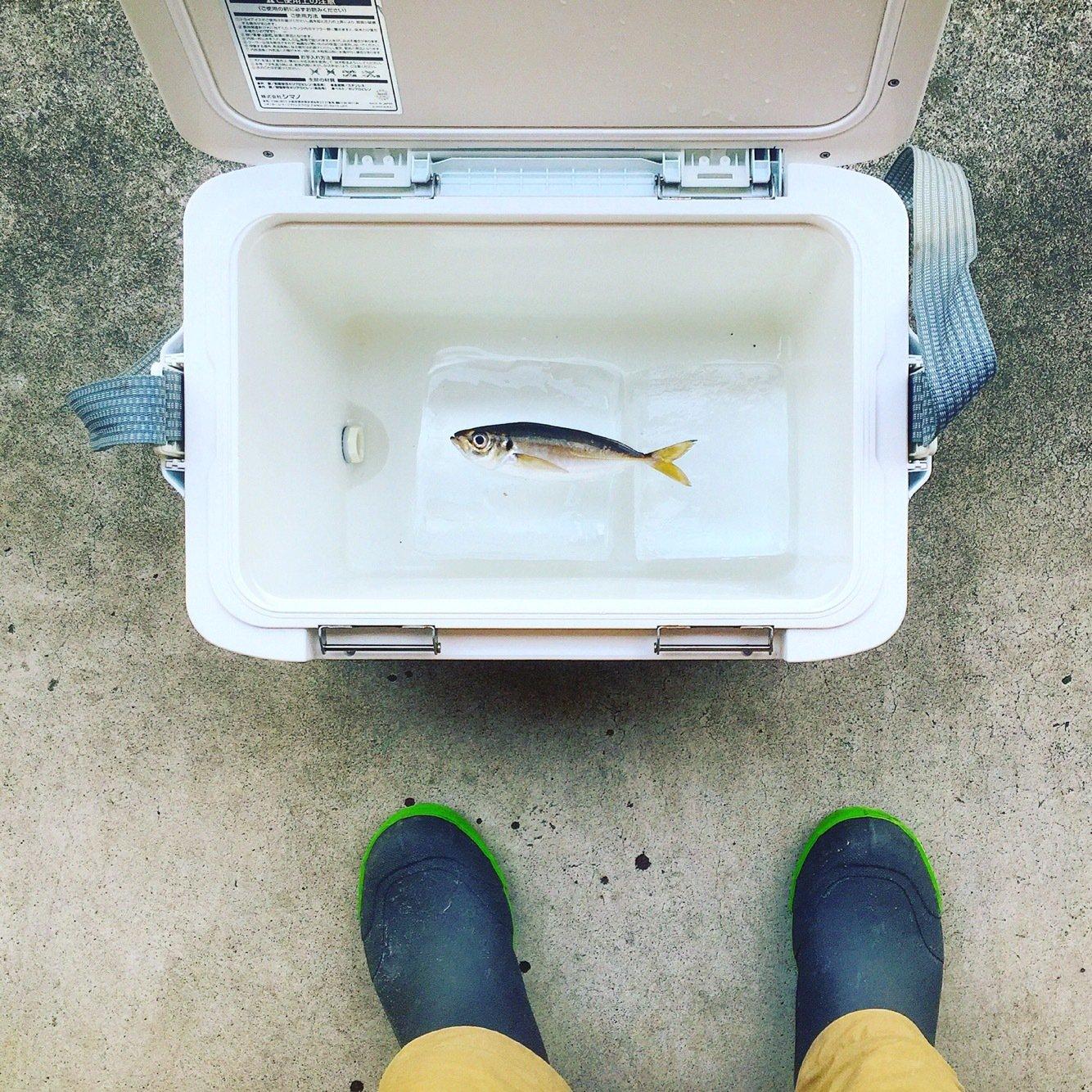 ハゼ男さんの投稿画像,写っている魚はアジ