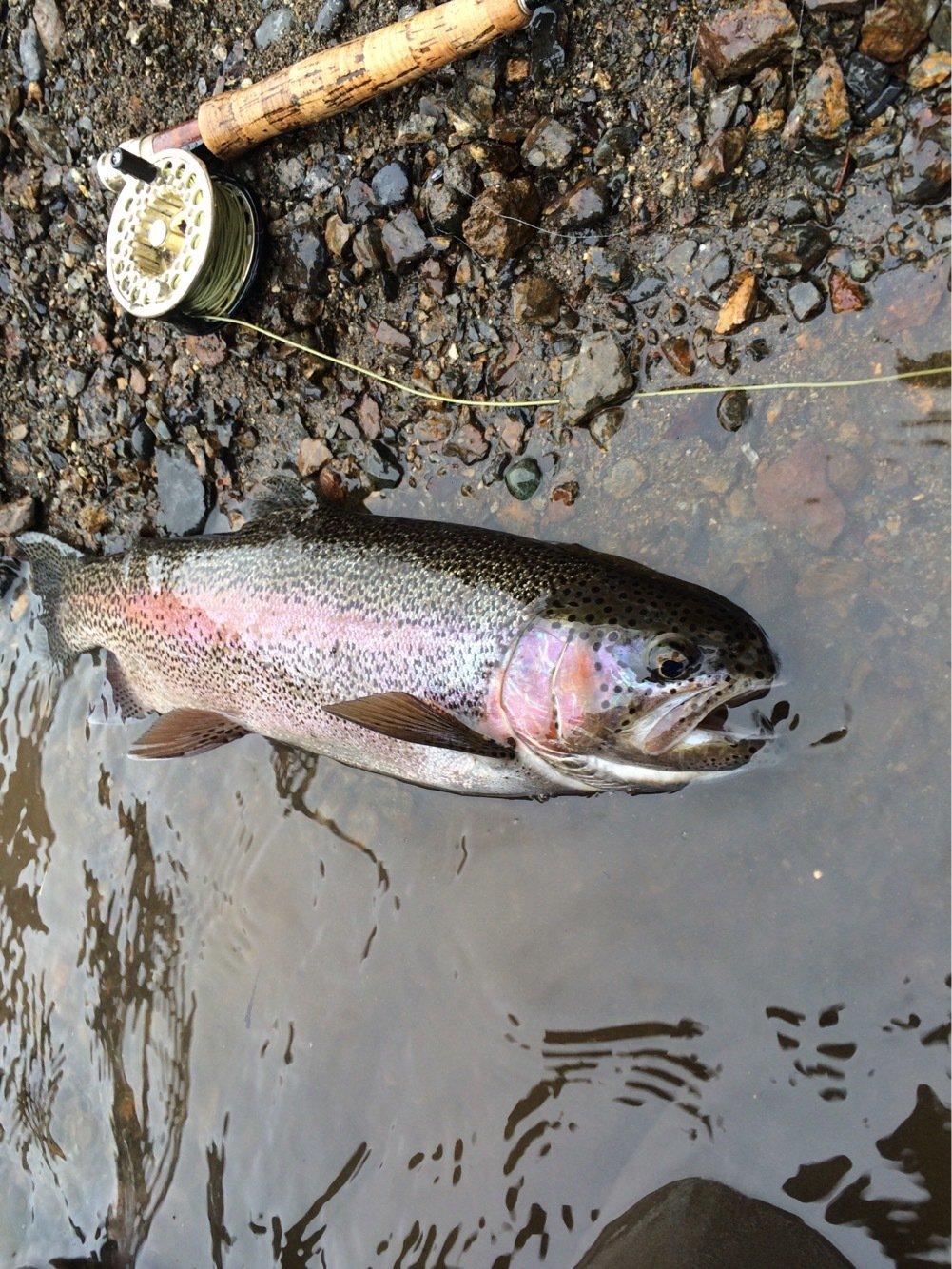 konnoさんの投稿画像,写っている魚はニジマス