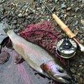 konnoさんの北海道上川郡での釣果写真