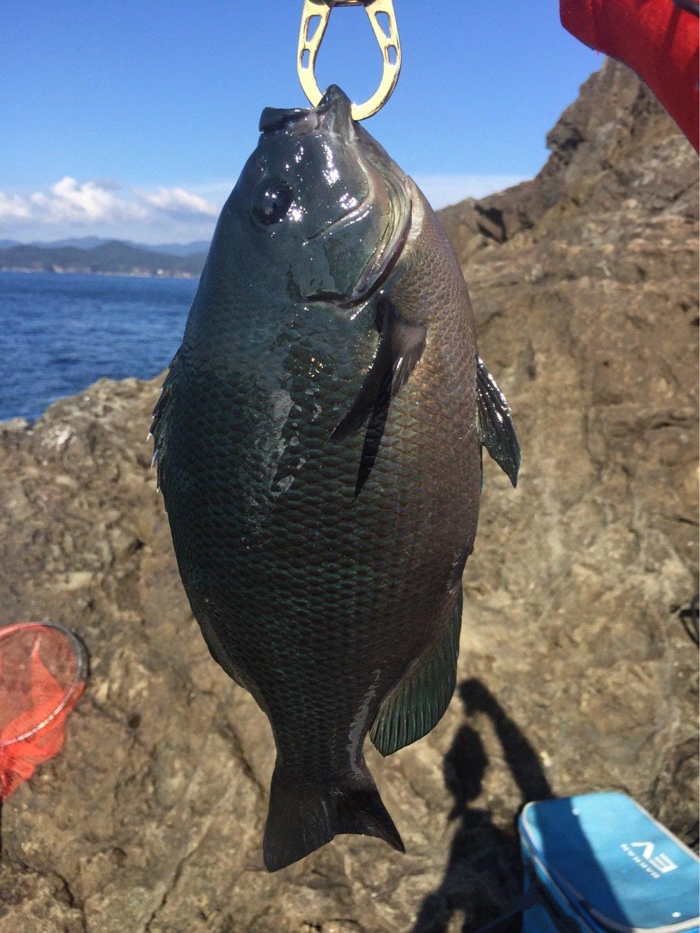 としはるいとさんの投稿画像,写っている魚はメジナ