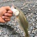 ネオンさんの神奈川県足柄上郡での釣果写真
