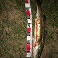 大ちゃんさんの茨城県潮来市でのスズキの釣果写真