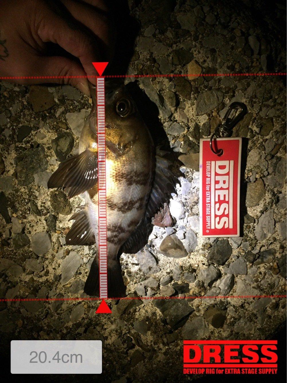 ヨシキングさんの投稿画像,写っている魚はシロメバル