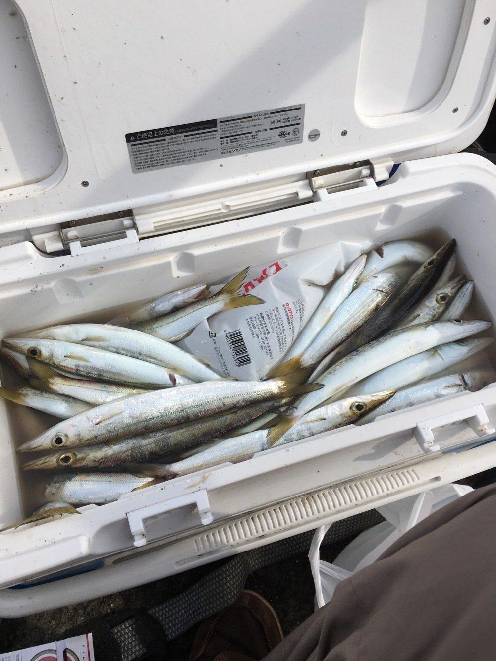 mourenyassaさんの投稿画像,写っている魚はカマス
