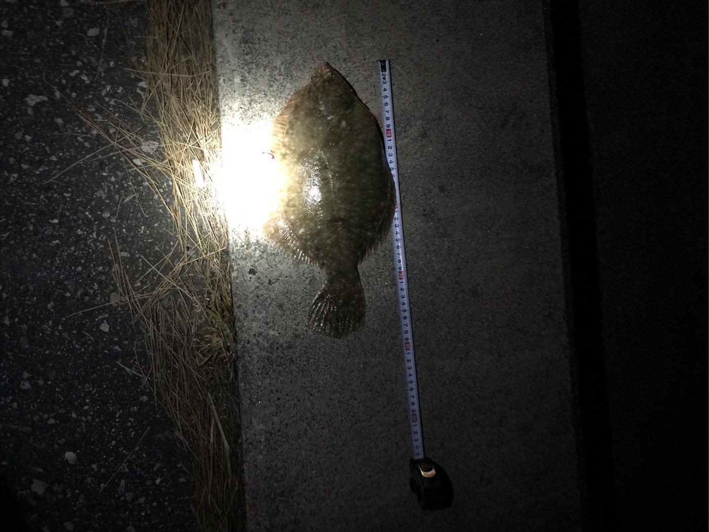 やまちゃんさんの投稿画像,写っている魚はカレイ