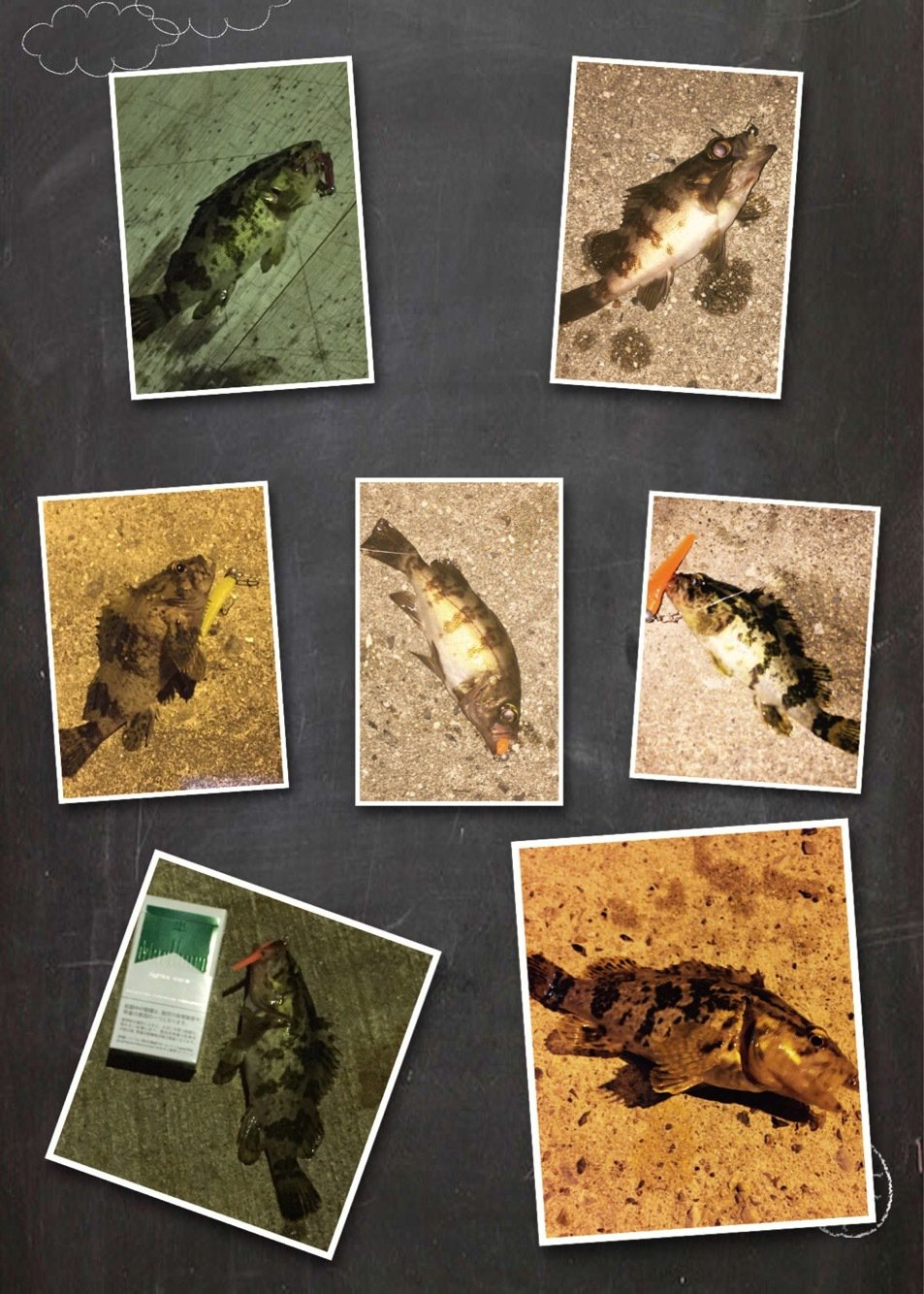 シーバス聖闘士さんの投稿画像,写っている魚はメバル