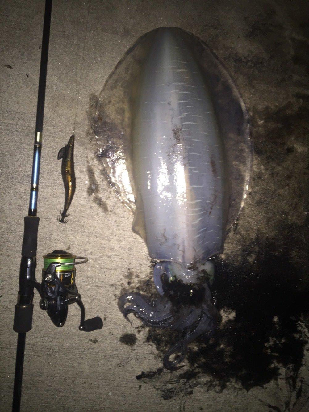 ヨウスケさんの投稿画像,写っている魚はアオリイカ
