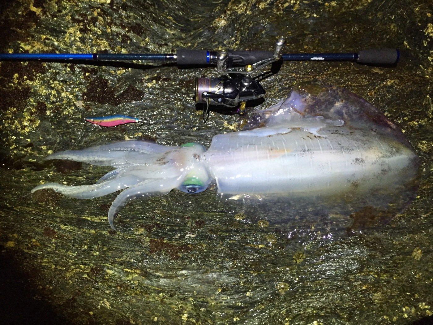 ジョンさんの投稿画像,写っている魚はアオリイカ