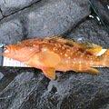 コウイチさんの広島県山県郡での釣果写真