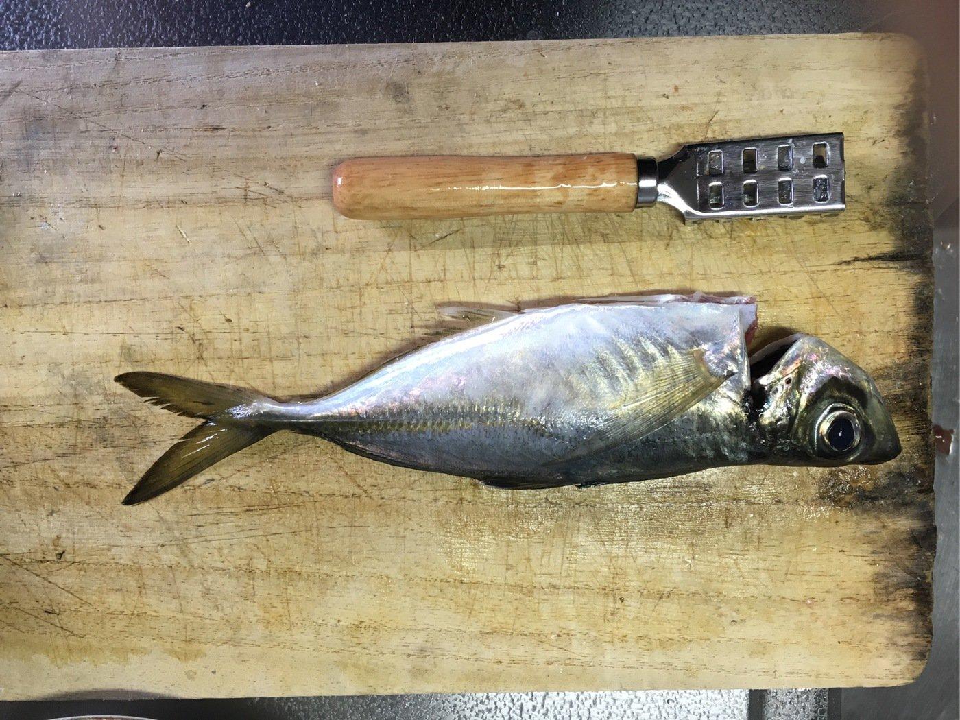 ライジングさんの投稿画像,写っている魚はアジ