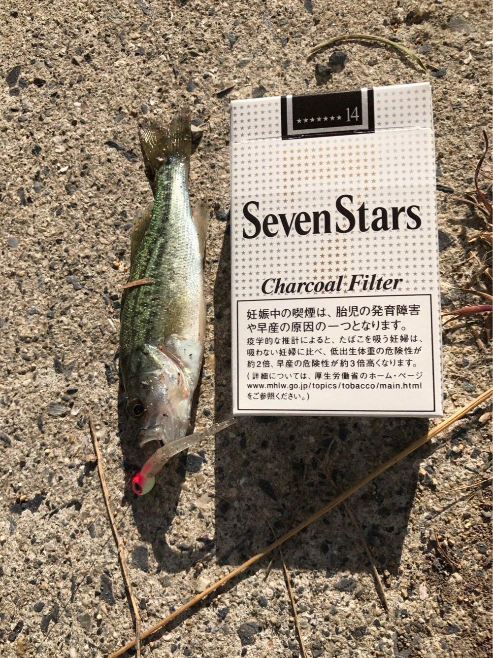 yasutakaさんの投稿画像,写っている魚はブラックバス