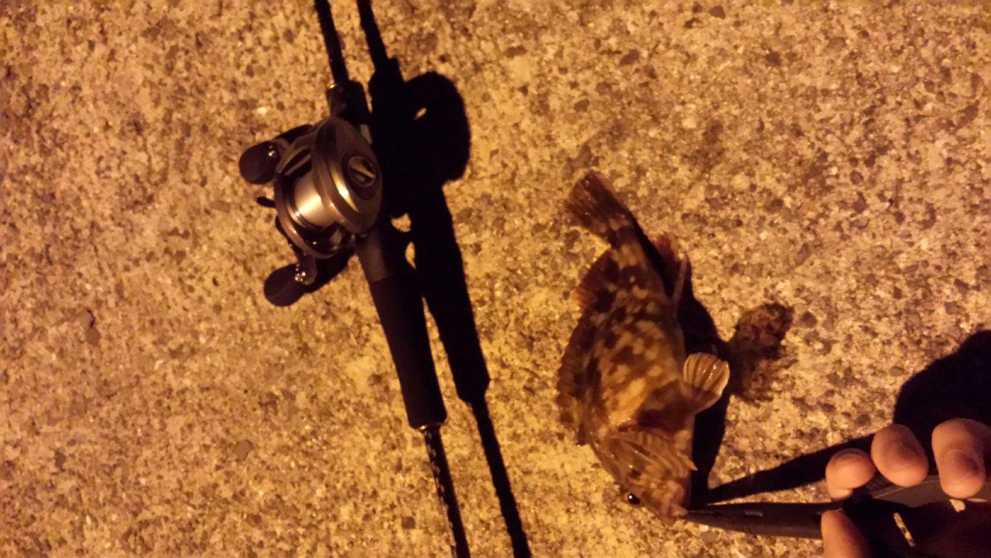 ススムさんの投稿画像,写っている魚はカサゴ
