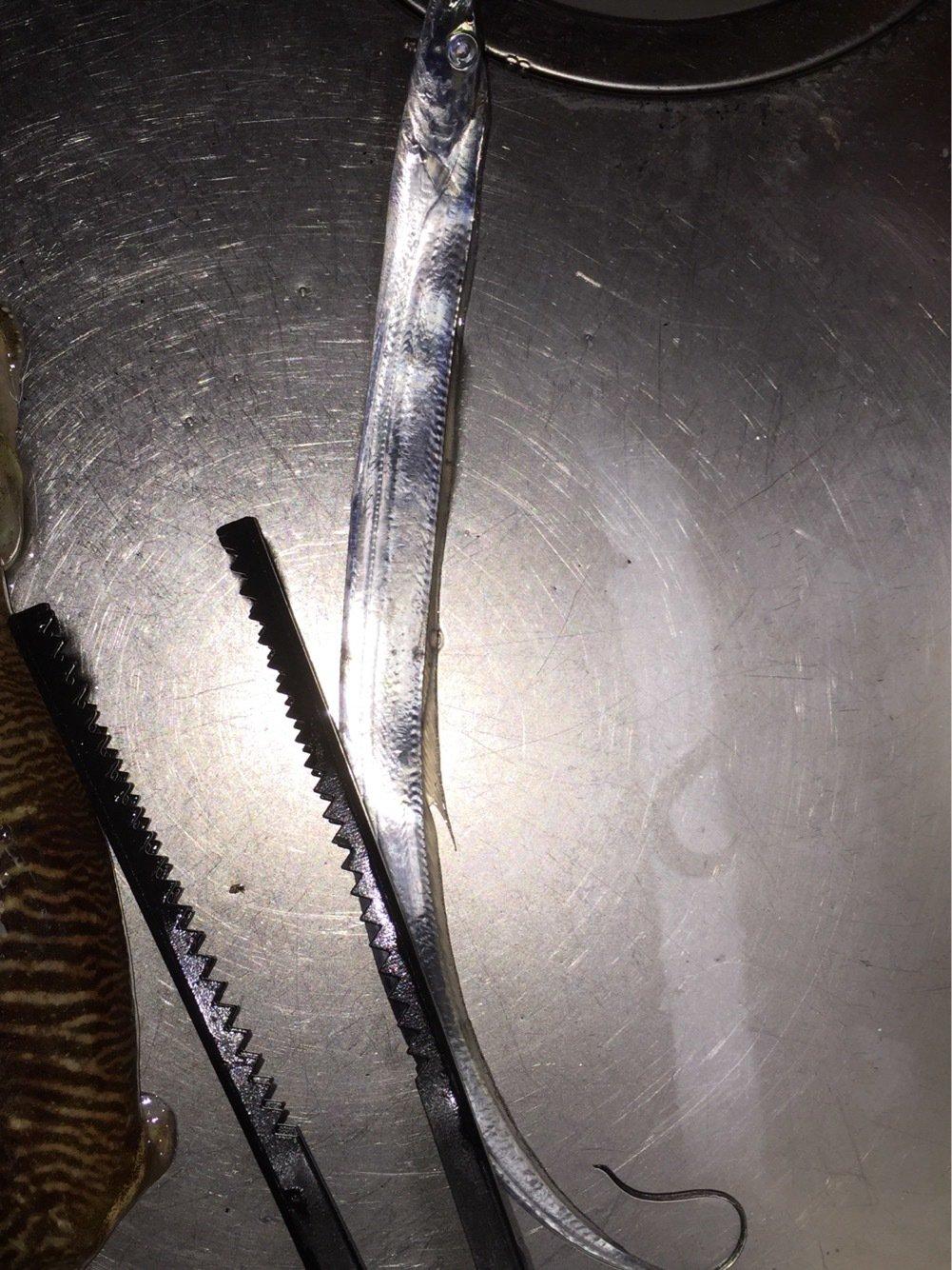 シタローさんの投稿画像,写っている魚はタチウオ