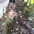 はすさんの兵庫県三木市での釣果写真
