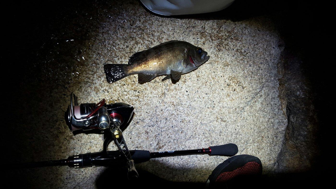 揚羽さんの投稿画像,写っている魚はメバル