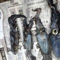 お父さんさんの広島県尾道市でのアオリイカの釣果写真