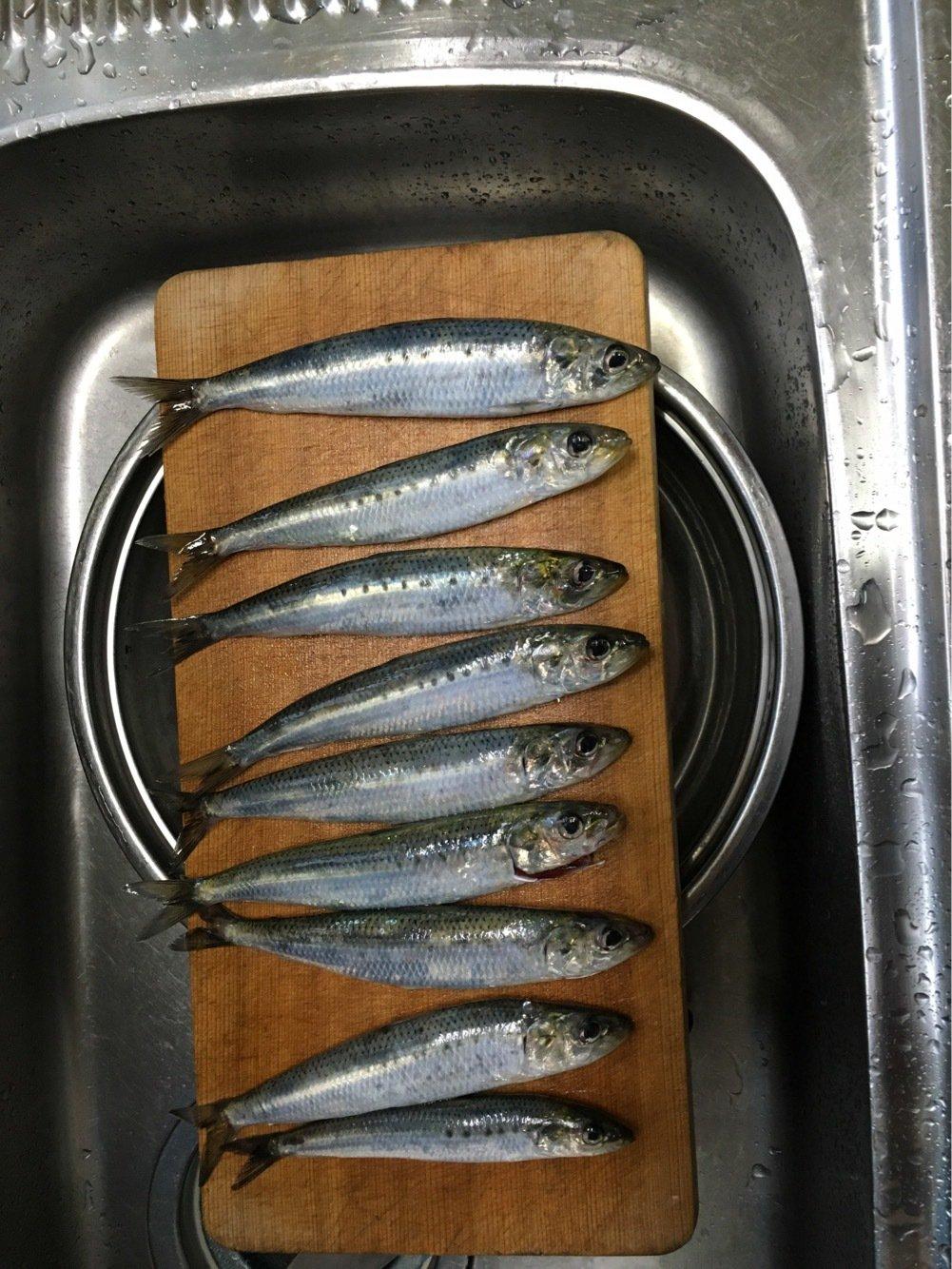 寅さんさんの投稿画像,写っている魚は