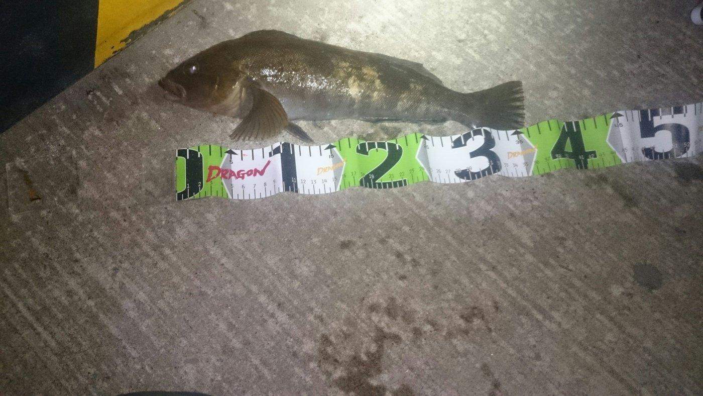 chef.kazu71さんの投稿画像,写っている魚はアイナメ