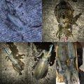 ダイワさんの徳島県勝浦郡での釣果写真
