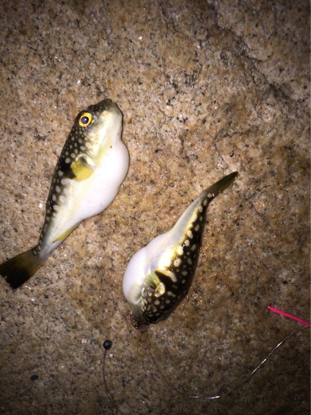 hide7さんの投稿画像,写っている魚は