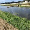 大森 慎吾さんの福岡県糸島市でのブラックバスの釣果写真
