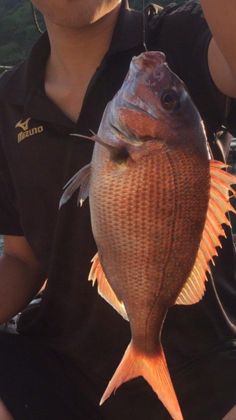 湊也さんの投稿画像,写っている魚はマダイ