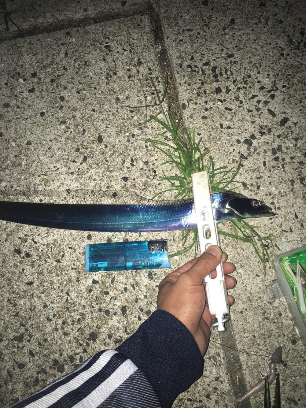 田野氏さんの投稿画像,写っている魚はタチウオ