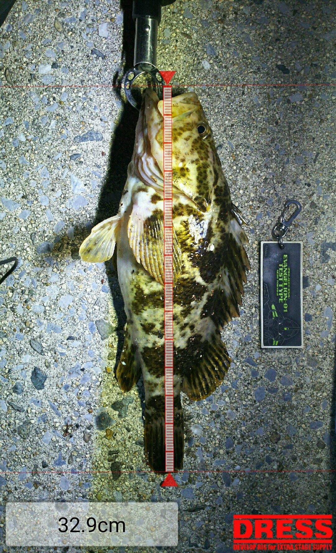 四日市アングラーさんの投稿画像,写っている魚はタケノコメバル