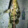 四日市アングラーさんの三重県四日市市でのタケノコメバルの釣果写真