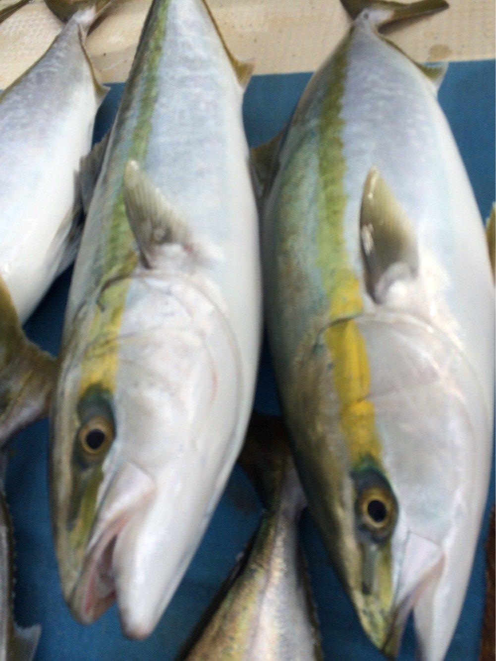 わせさんの投稿画像,写っている魚は