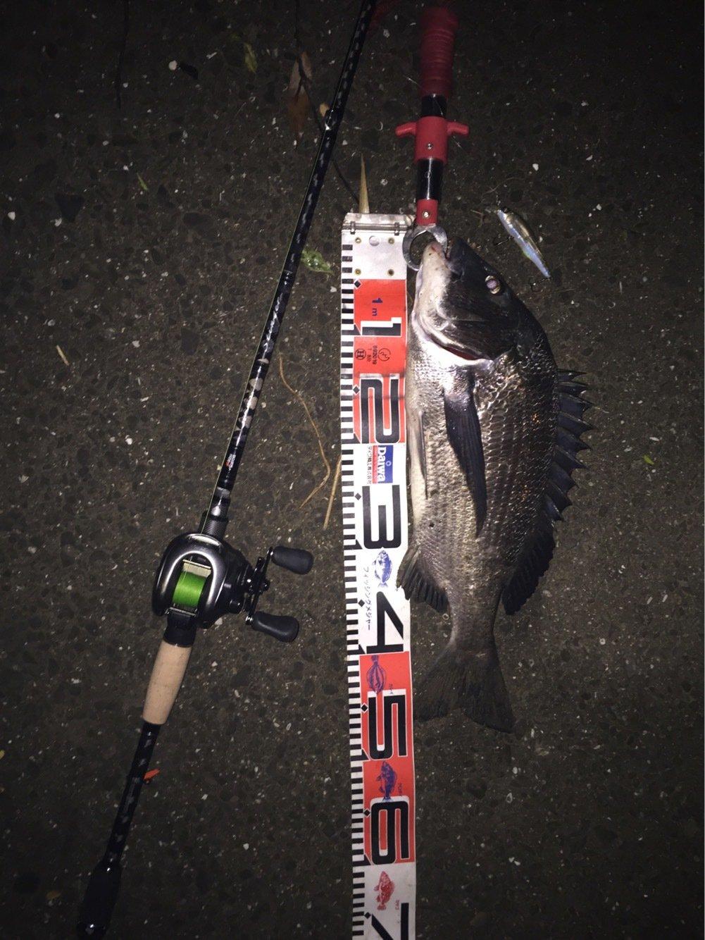 Rさんの投稿画像,写っている魚はクロダイ