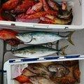 大黒 太郎さんの大分県玖珠郡での釣果写真