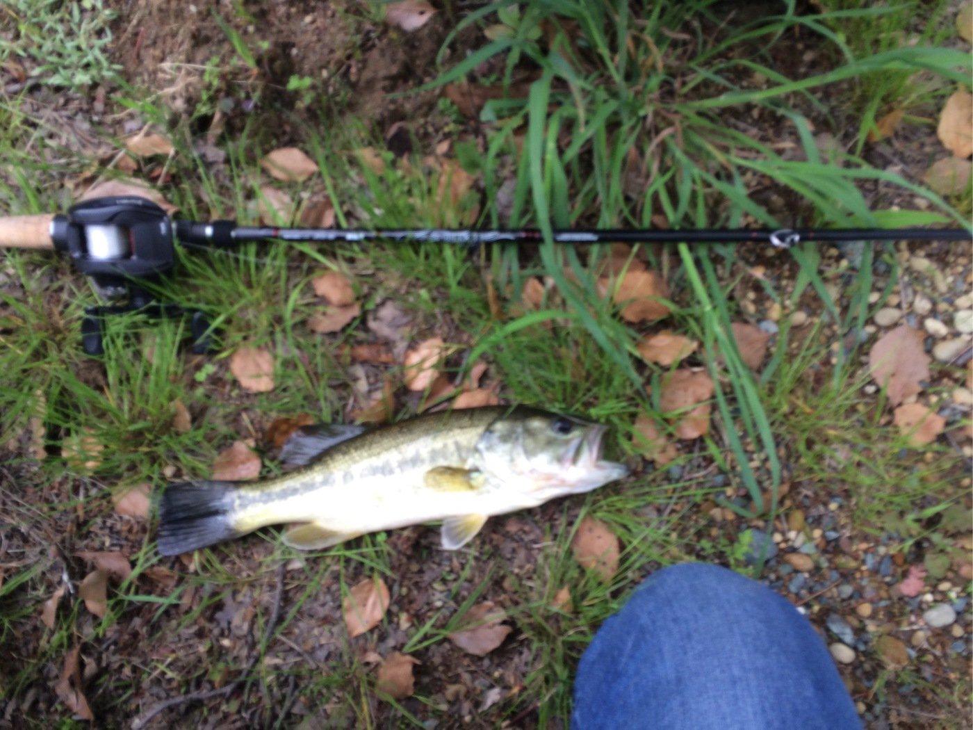 サブ(≧∇≦)さんの投稿画像,写っている魚はブラックバス